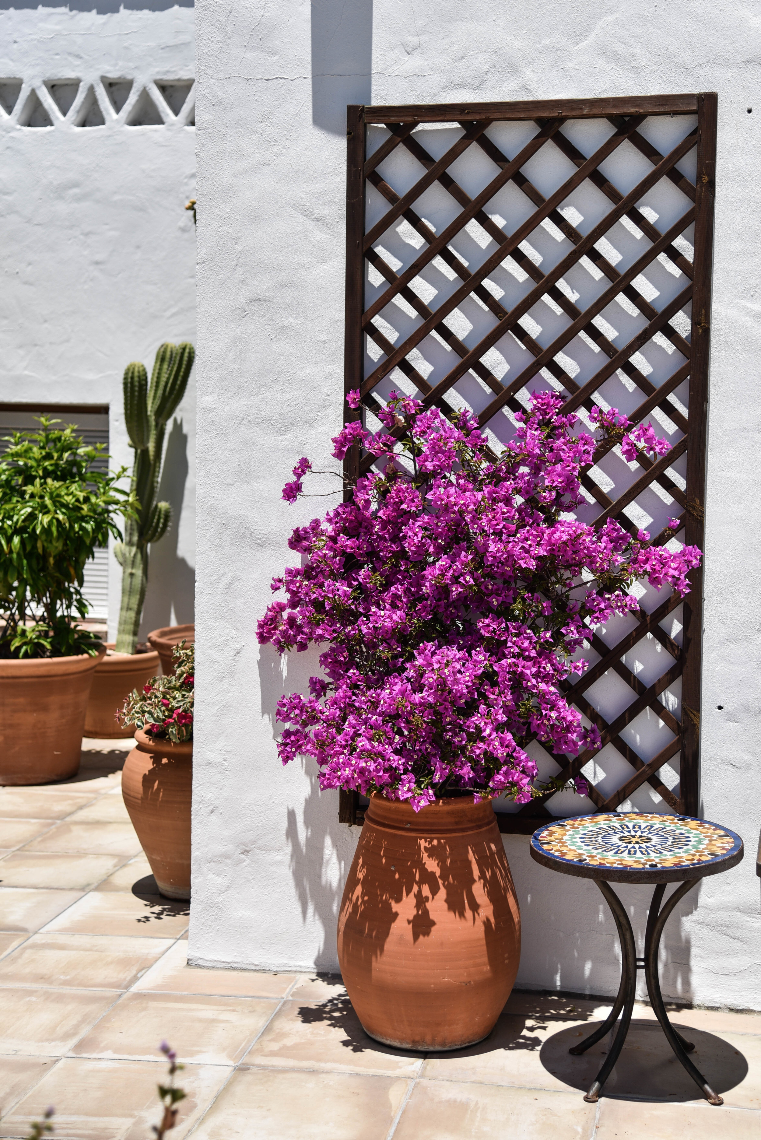 ROSE & IVY Journal Escape Hotel Califa Vejer Spain