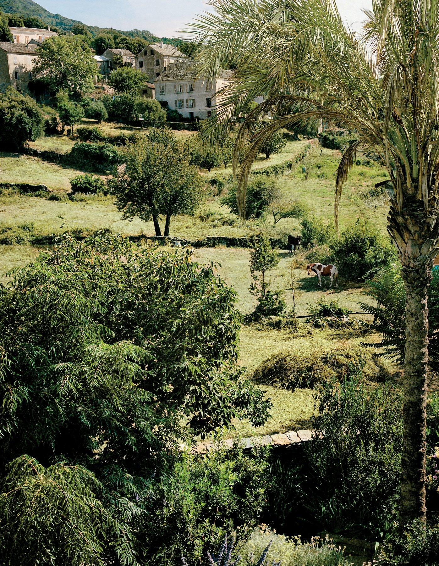 ROSE & IVY Journal A Corsica Retreat