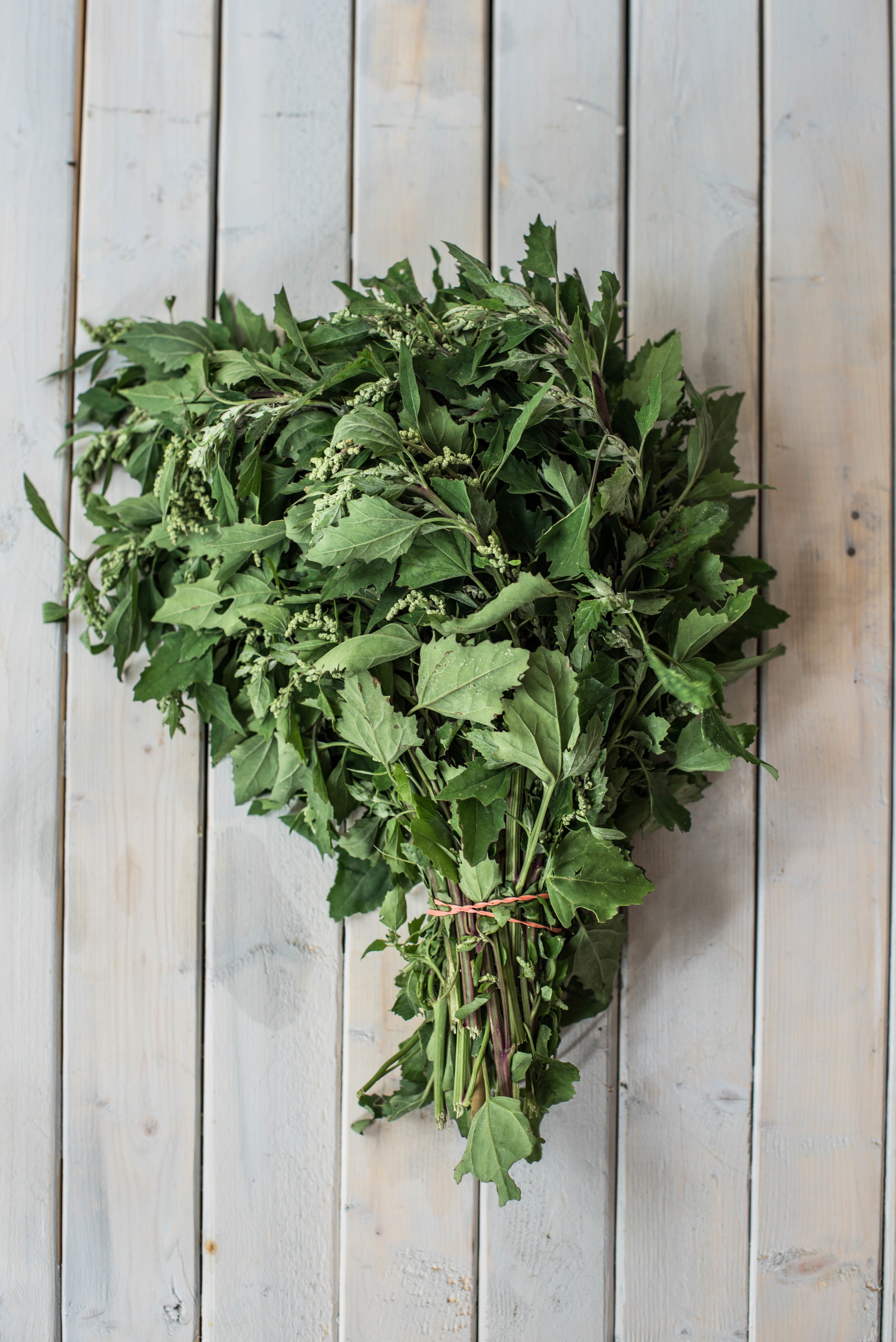 ROSE & IVY Journal Get to Know Your Greens | Lambs Quarter or Wild Spinach