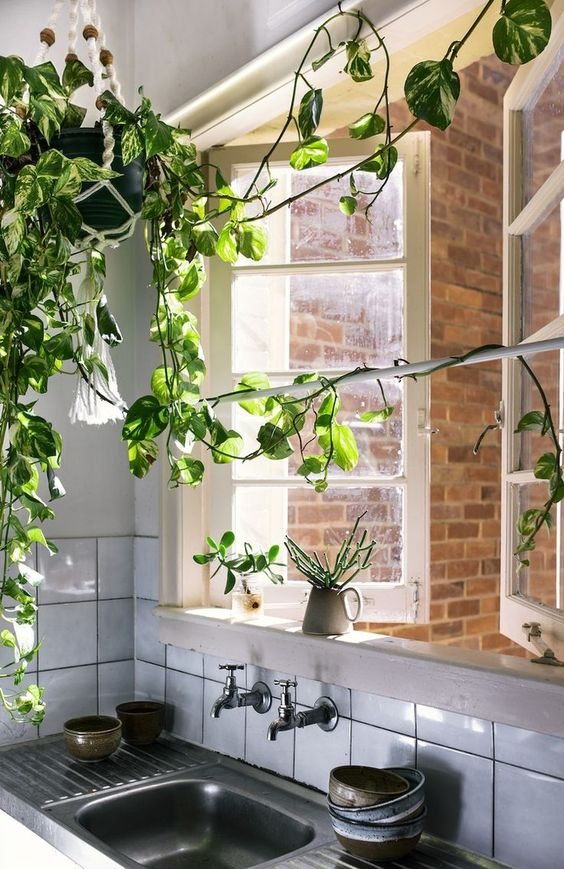 Decorating Idea The Indoor Vine Rose Ivy