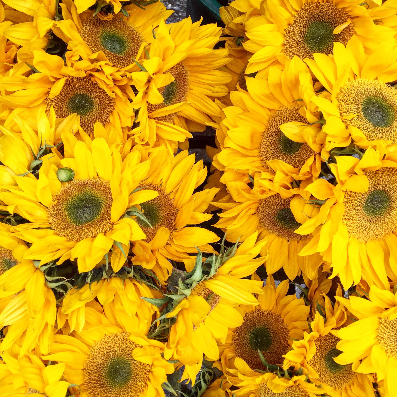 Sunshine state, sunflowers just make me happy