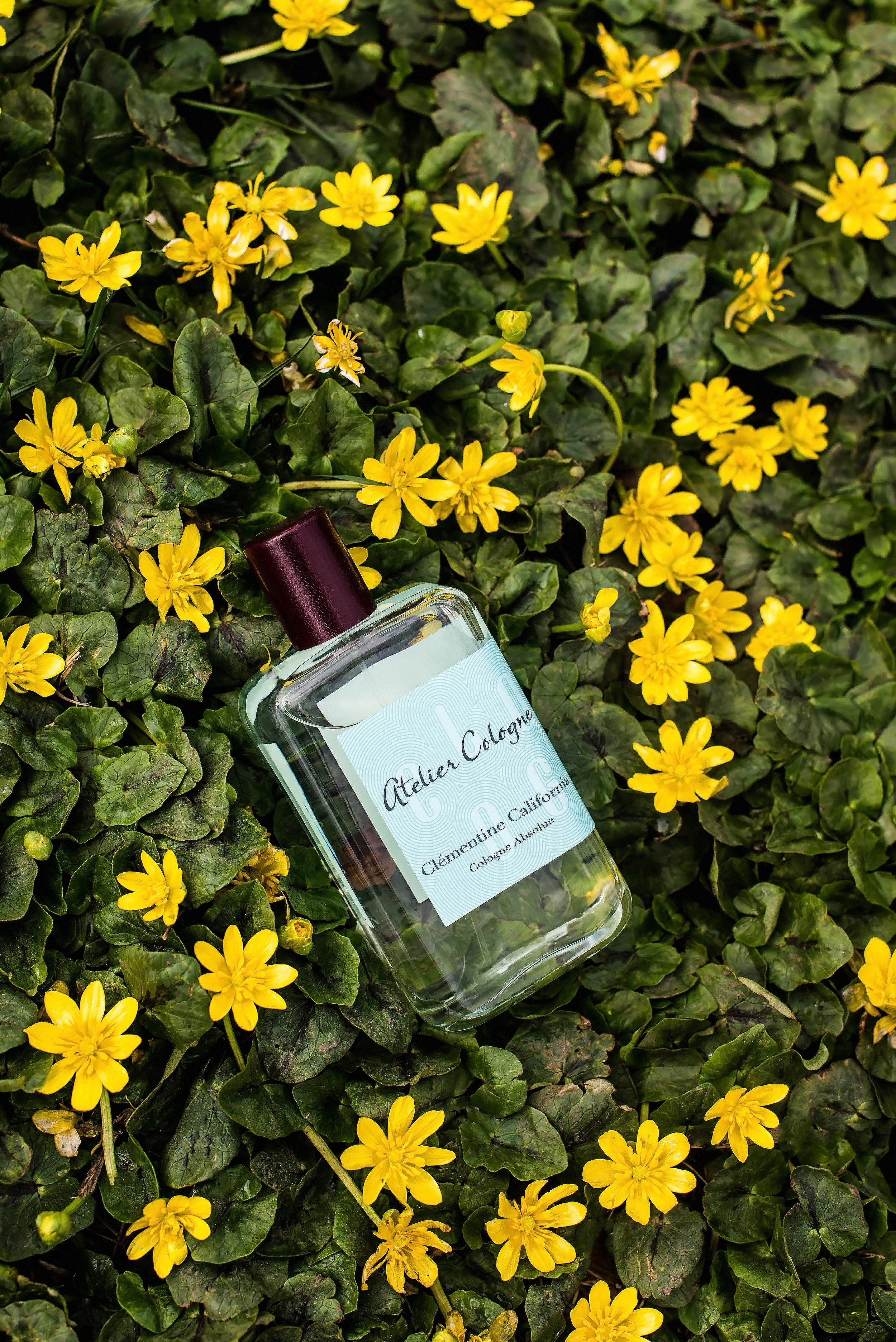 ROSE & IVY Journal Four New Fragrances for Spring Atelier Cologne Clementine California