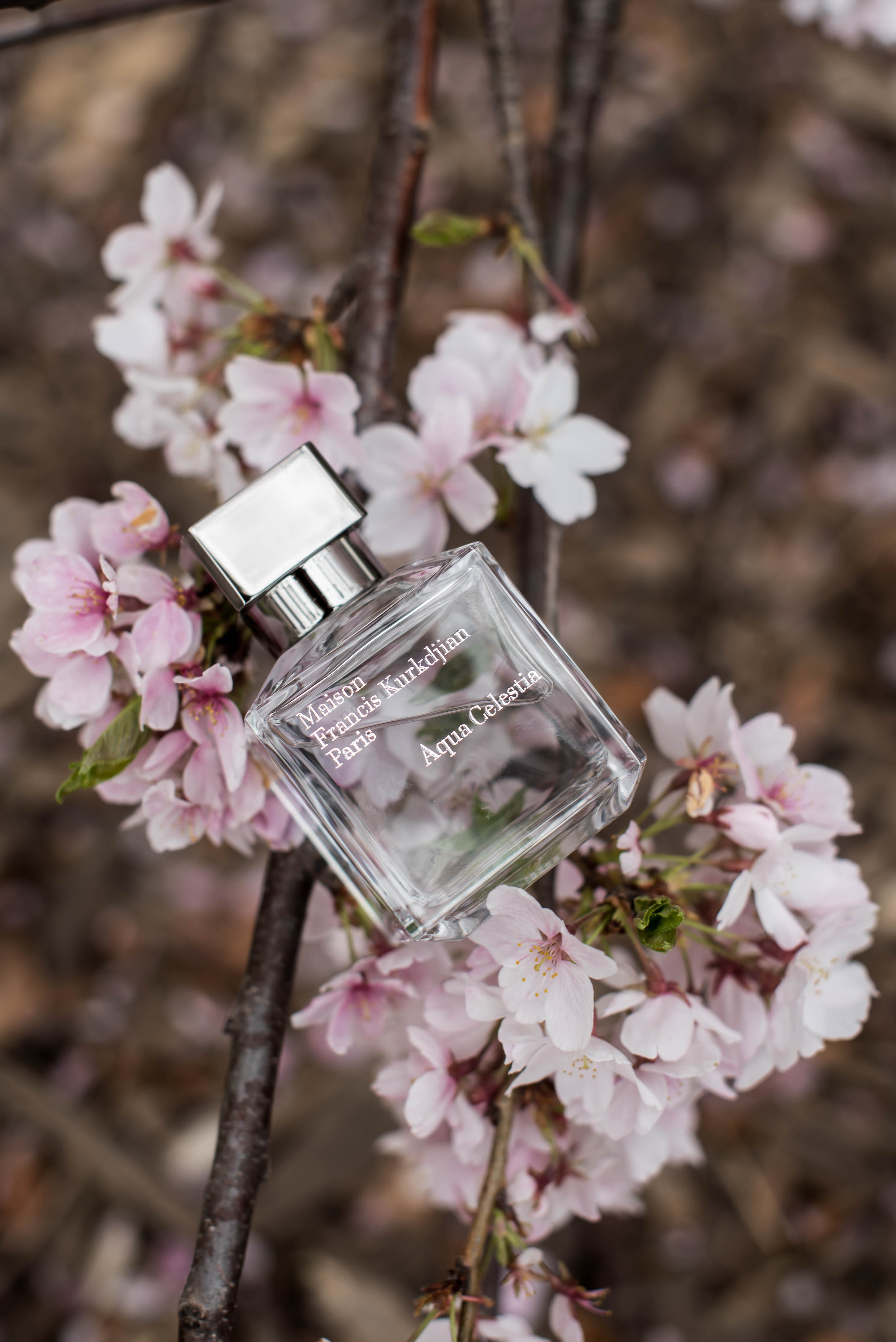 ROSE & IVY Journal Four New Fragrances for Spring Maison Francis Kurkijan Aqua Celestia