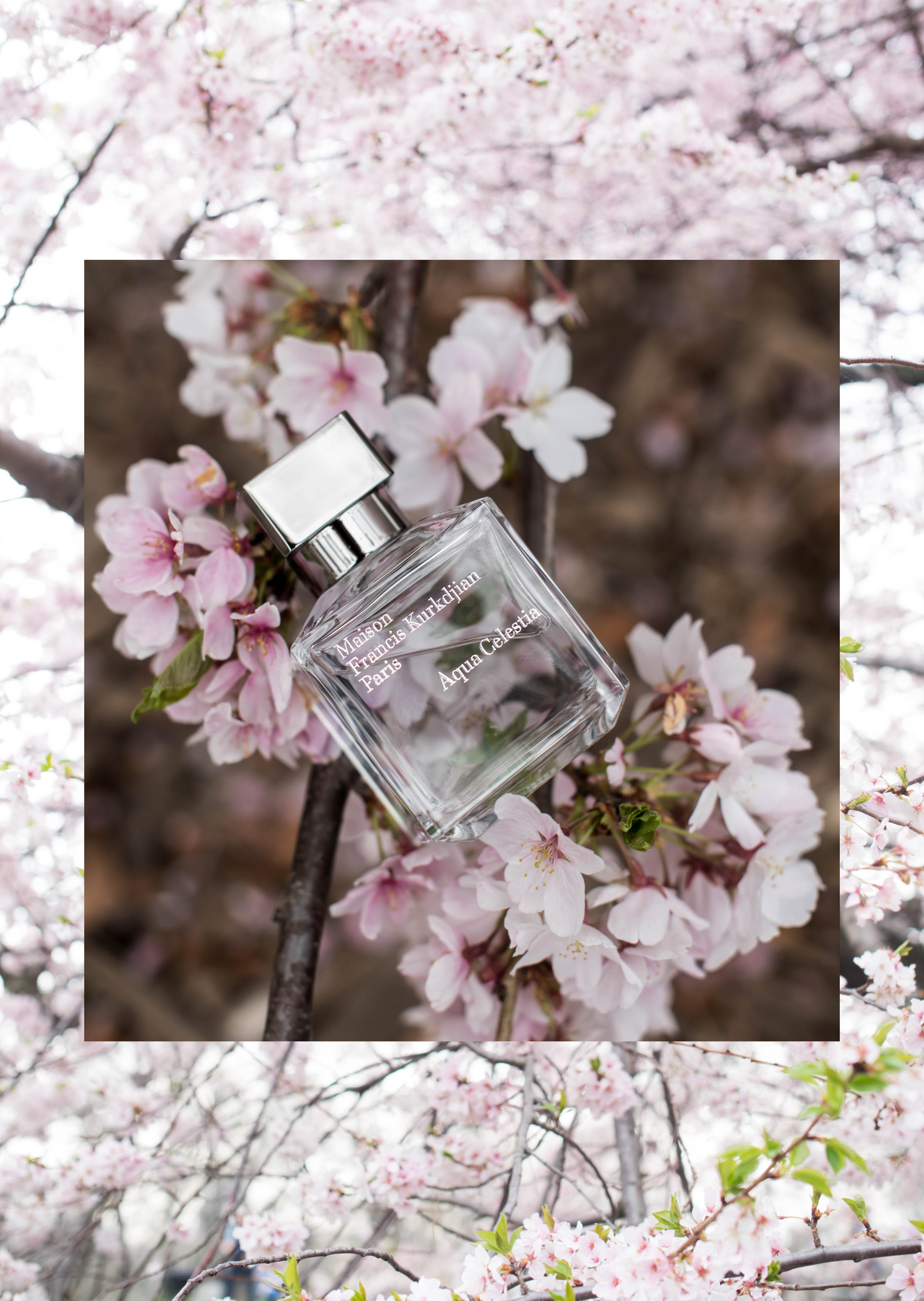 ROSE & IVY Journal Four New Fragrances for Spring Maison Francis Kurkdijan Aqua Celestia