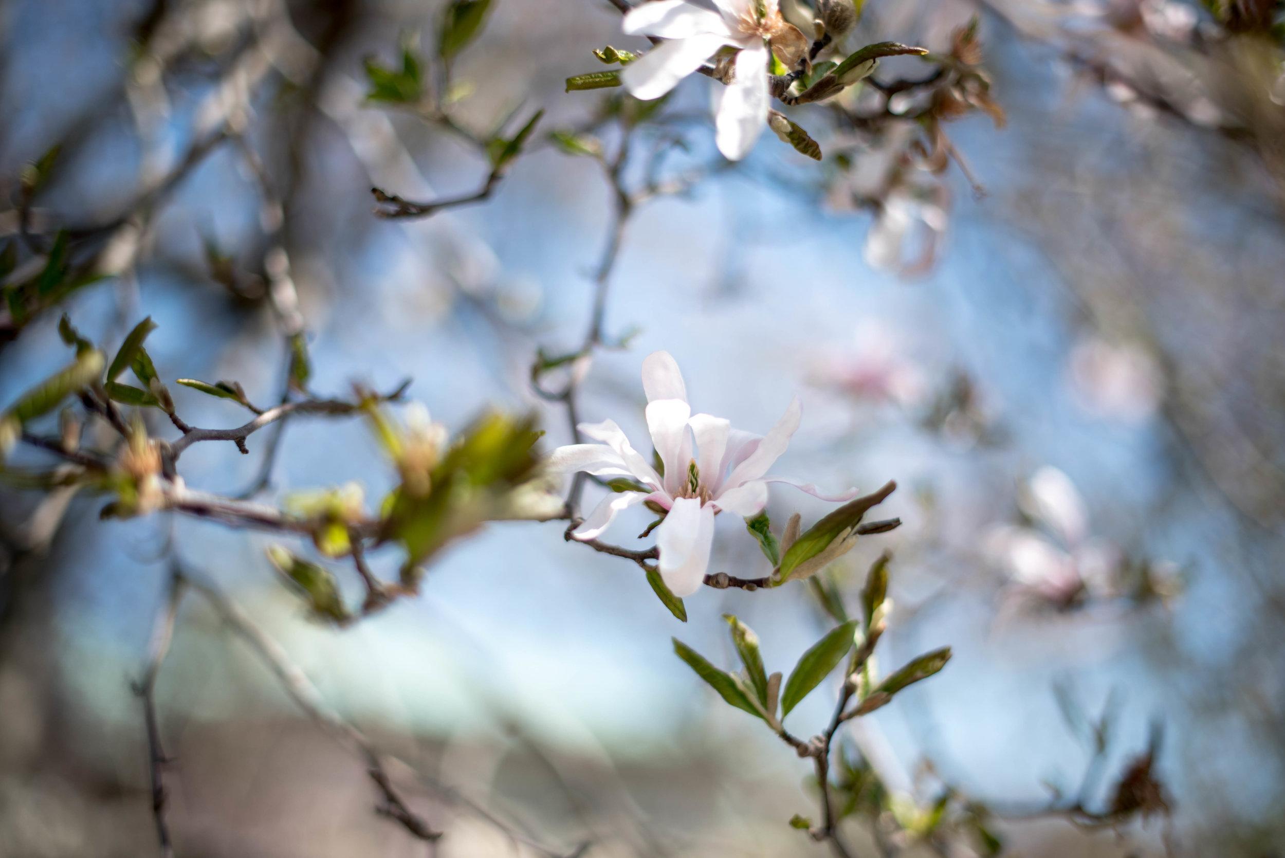 ROSE & IVY Journal Floating Magnolias
