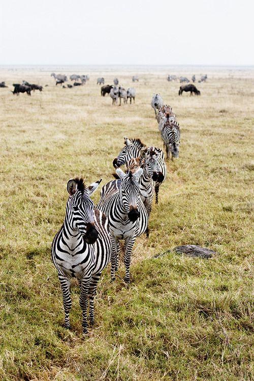 ROSE & IVY Journal The Wanderlust List 2018 Tanzania Safari