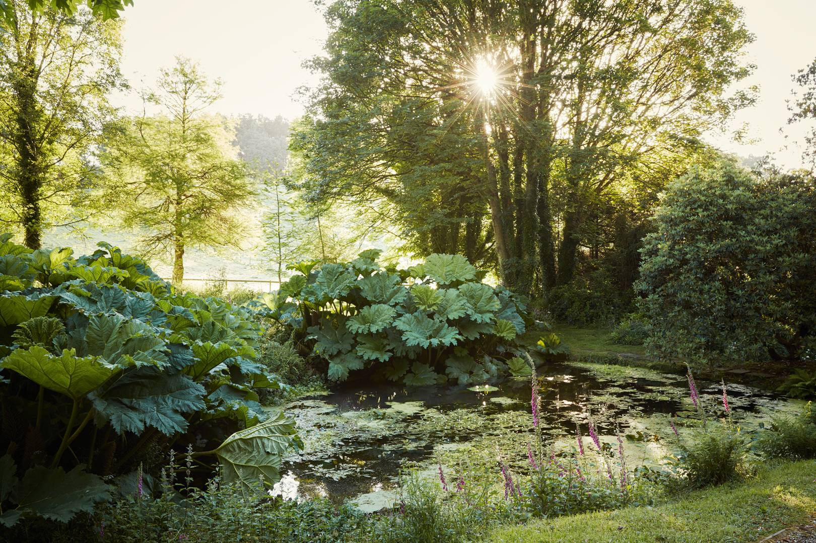 ROSE & IVY Journal Garden Dreamer | An Enchanting Garden in Devon, England