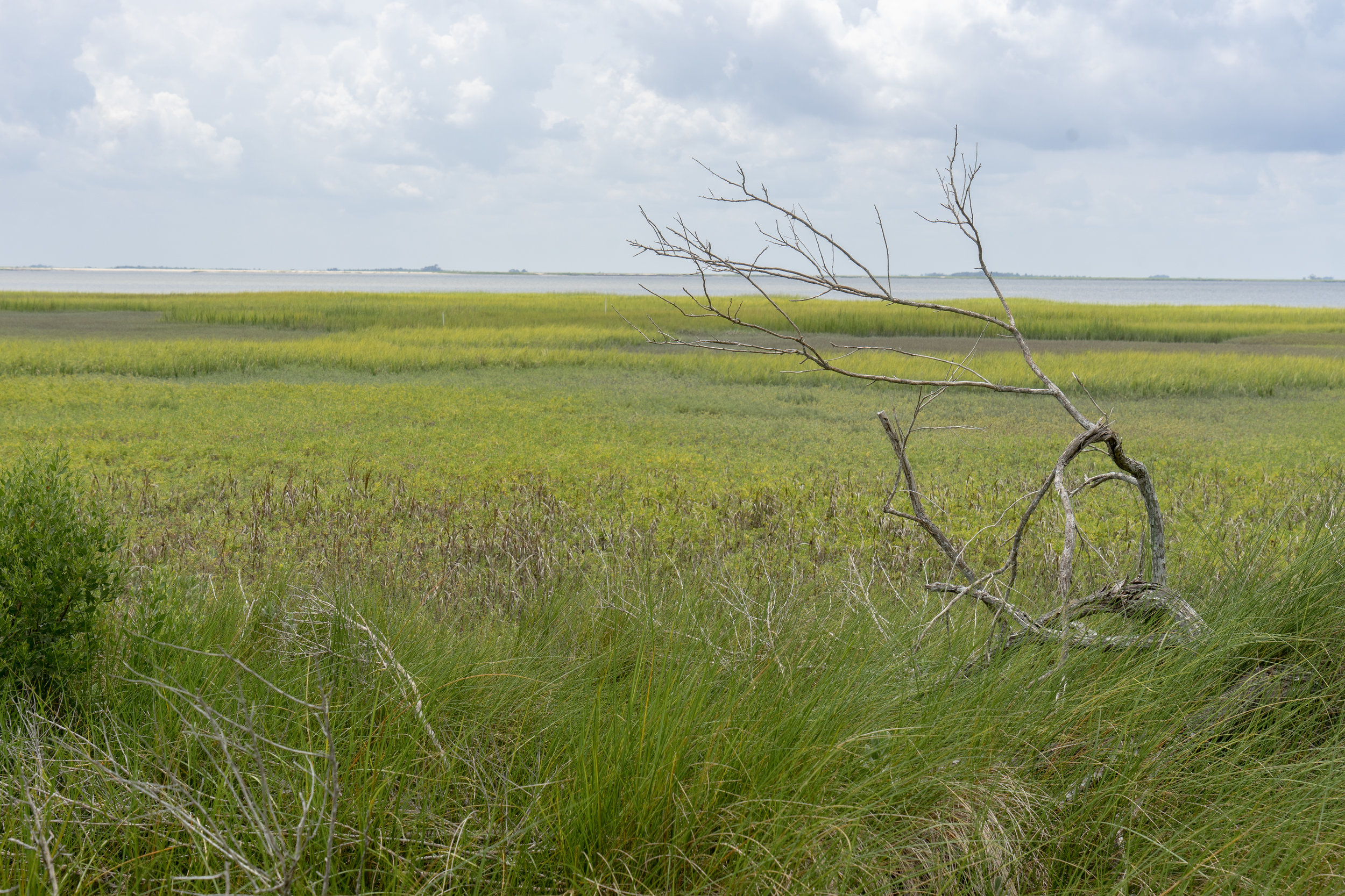 A Trip off the Coast Sapelo Island Marshland