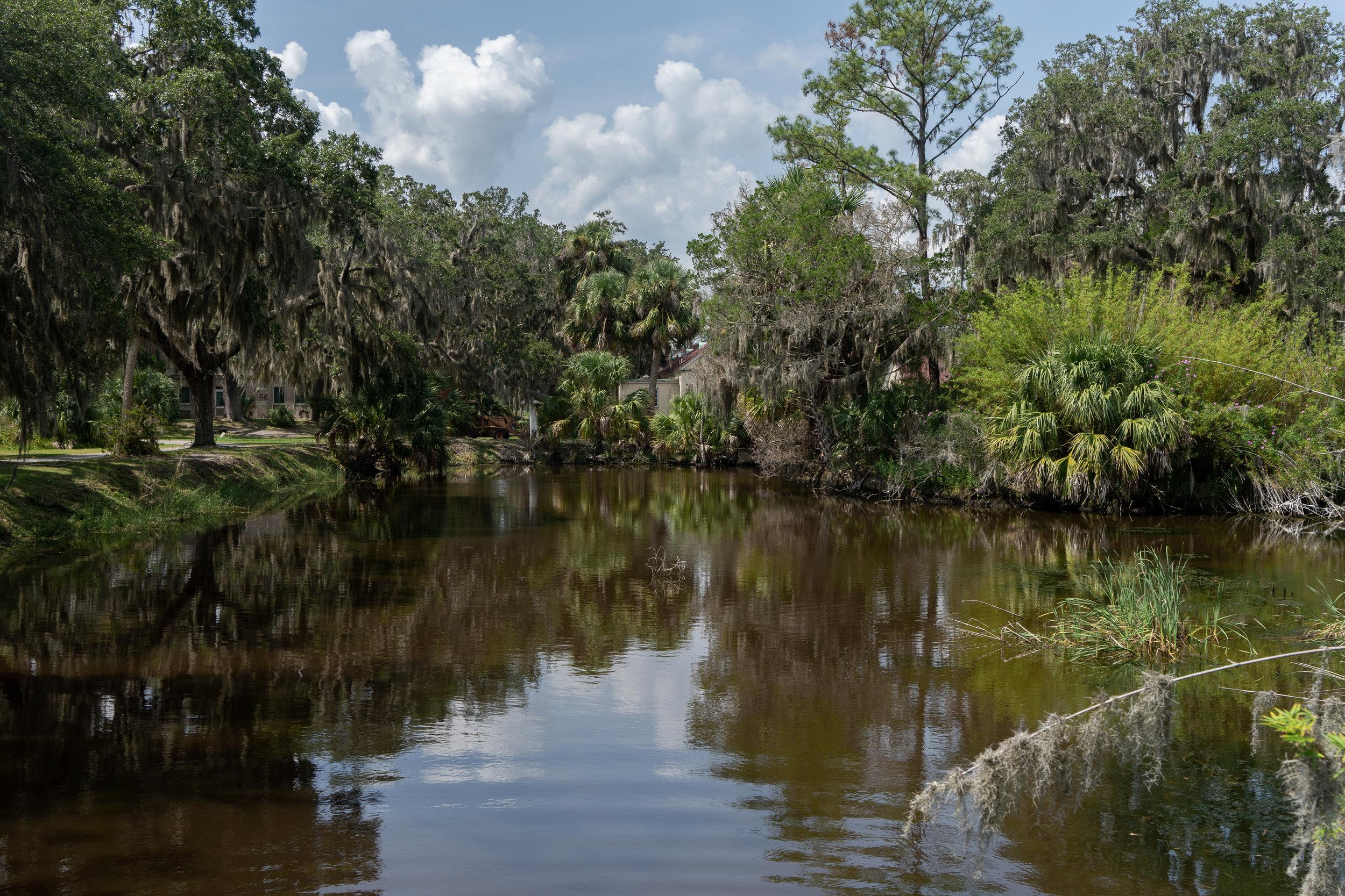 A Trip off the Coast Sapelo Island Botanical Garden Swamp