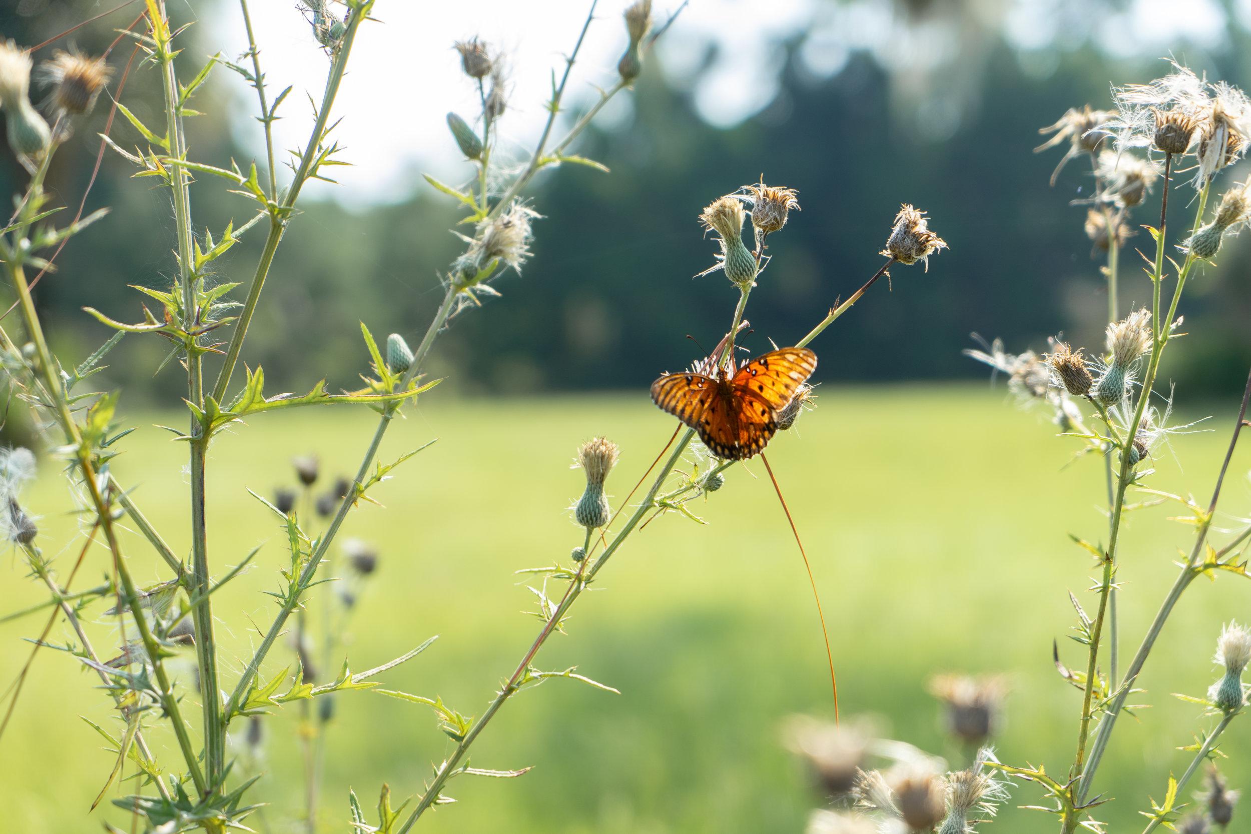 A Trip off the Coast Sapelo Island Plantation Butterfly