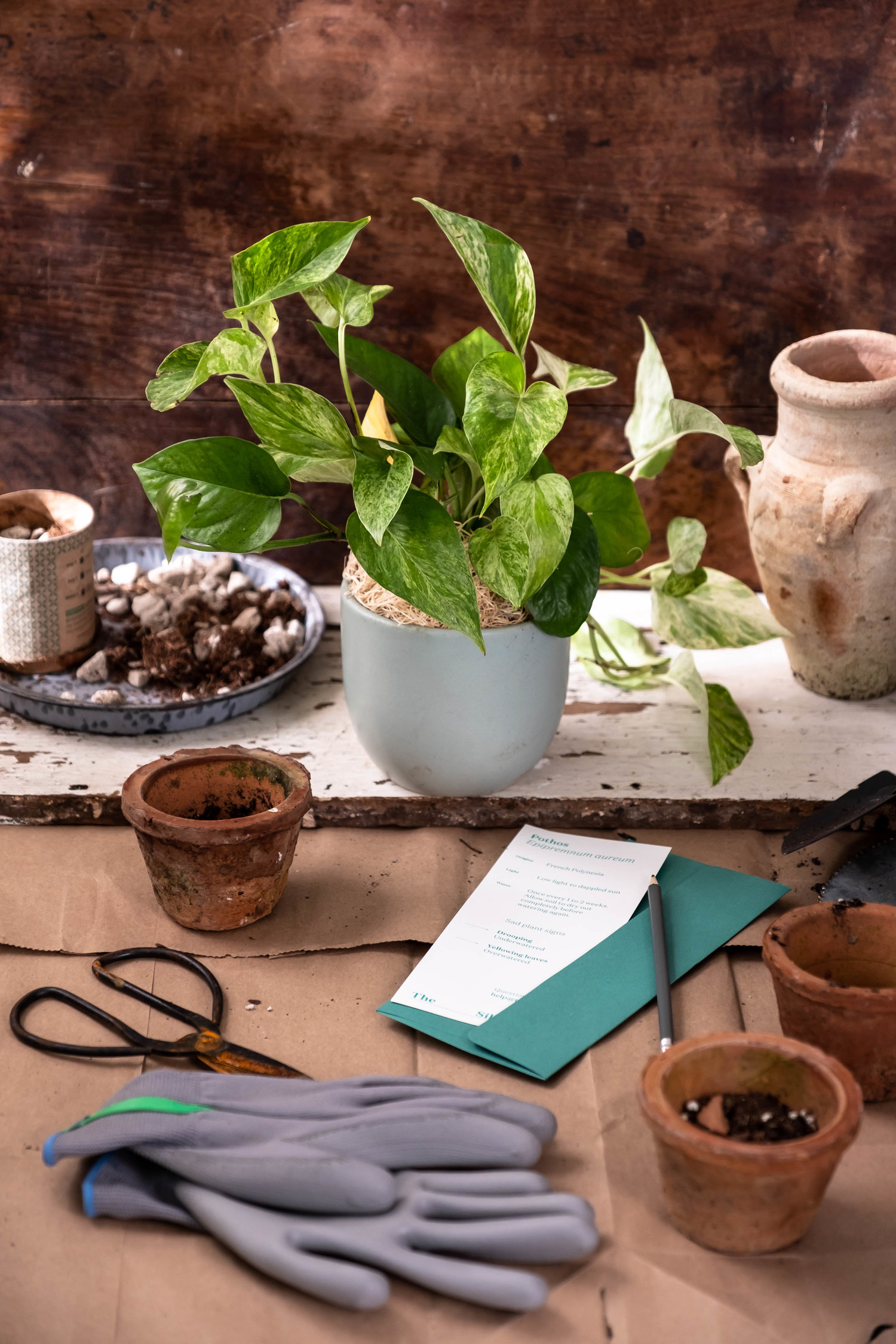 ROSE & IVY Journal Holiday Gifting Help Them Cultivate a Green Thumb The Sill Subscription