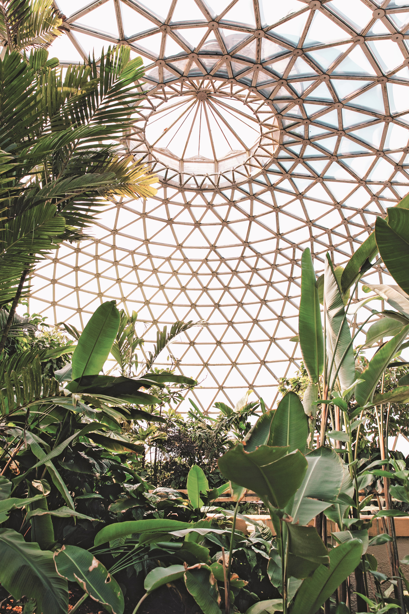 TROPICAL DISPLAY DOME, Brisbane Botanic Garden, Mount Coottha, Queensland, Australia. Photography copyright © India Hobson and Magnus Edmondson 2018.