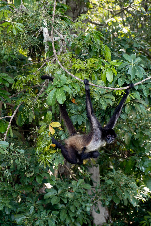 ROSE & IVY Exploring Guatemala | The Ruins of Tikal and Monkey Island