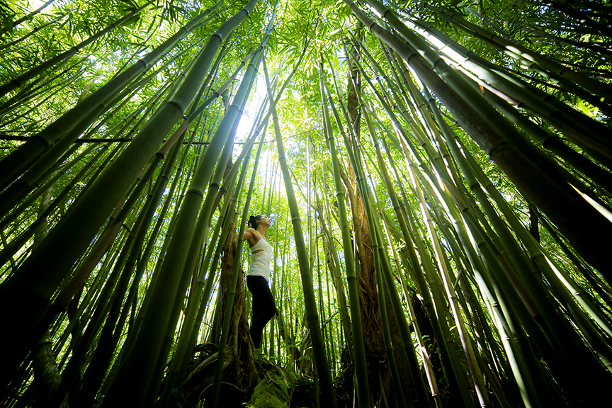 Passage to Nature - 楽園の島ハワイ オアフ島。いつものハワイとは違う数日間を過ごす。ビーチライフやショッピングだけではない新しい発見があるかもしれません。