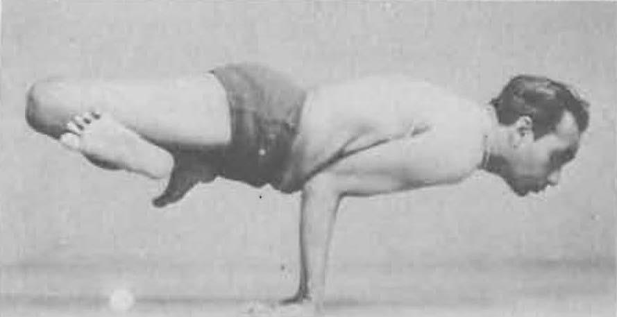 127-padma-mayurasana-yoga-pose-iyengar.jpg