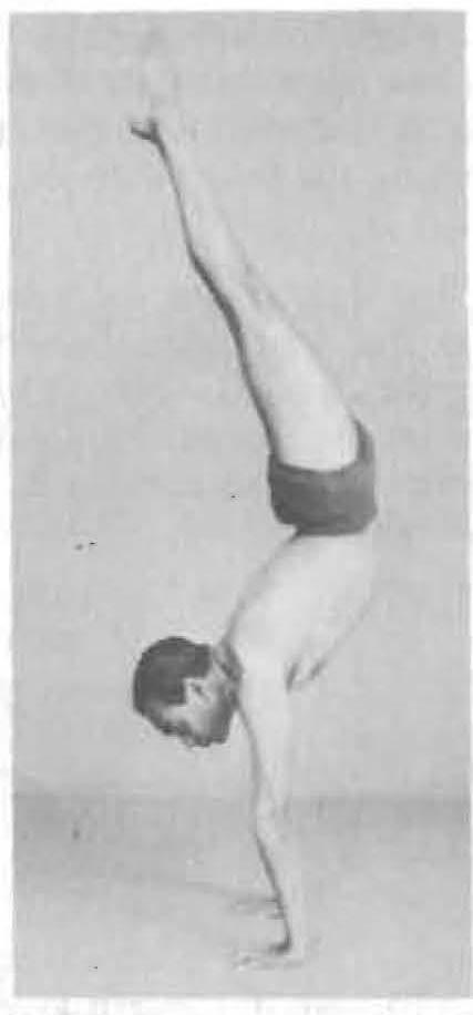 131-adho-mukha-vrksasana-yoga-pose-iyengar.jpg