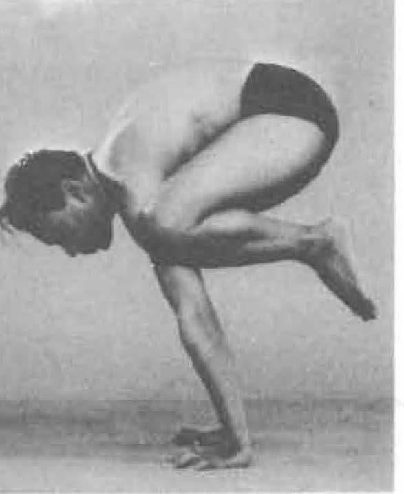 151-bakasana-yoga-pose-iyengar.jpg