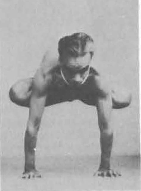 153-urdhva-kukkutasana-yoga-pose-iyengar.jpg