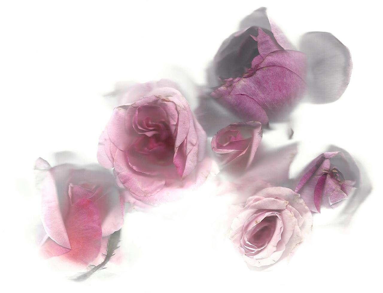 Flora_04.jpg