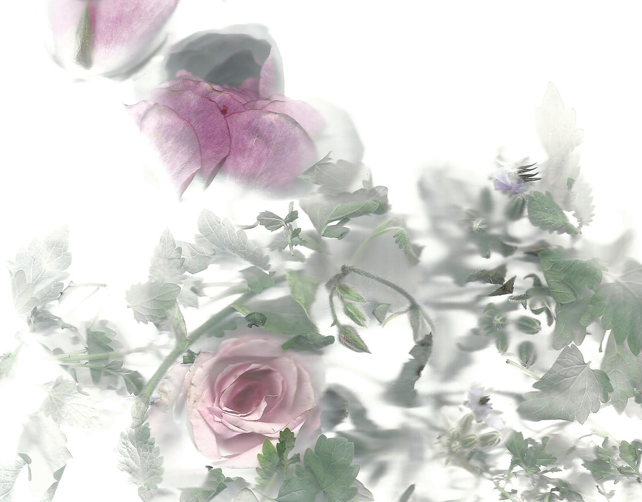 Flora_06.jpg