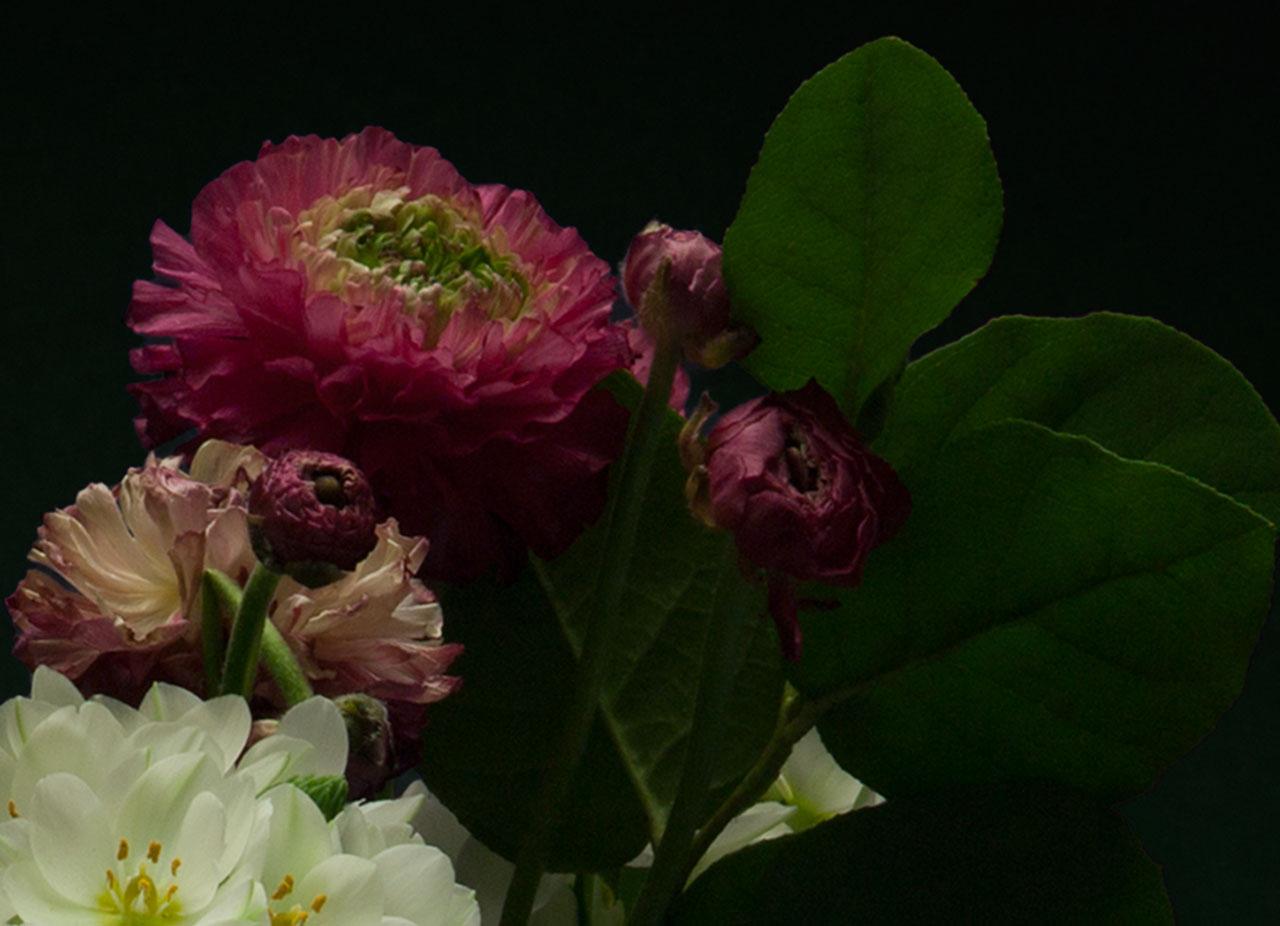 Night-Bloom_2.jpg
