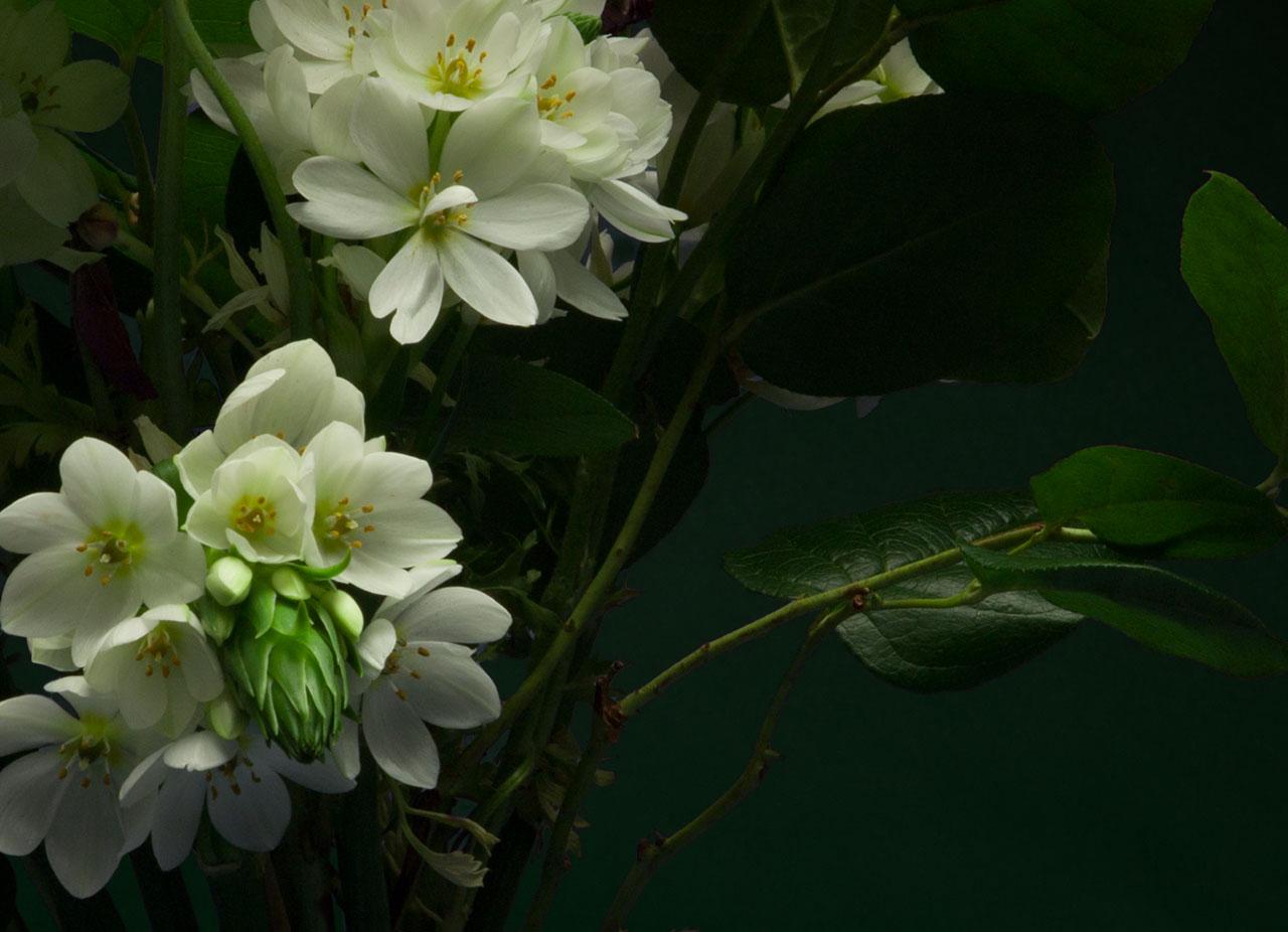 Night-Bloom_1.jpg
