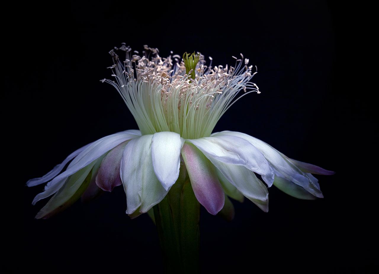 Night-Bloom_5.jpg