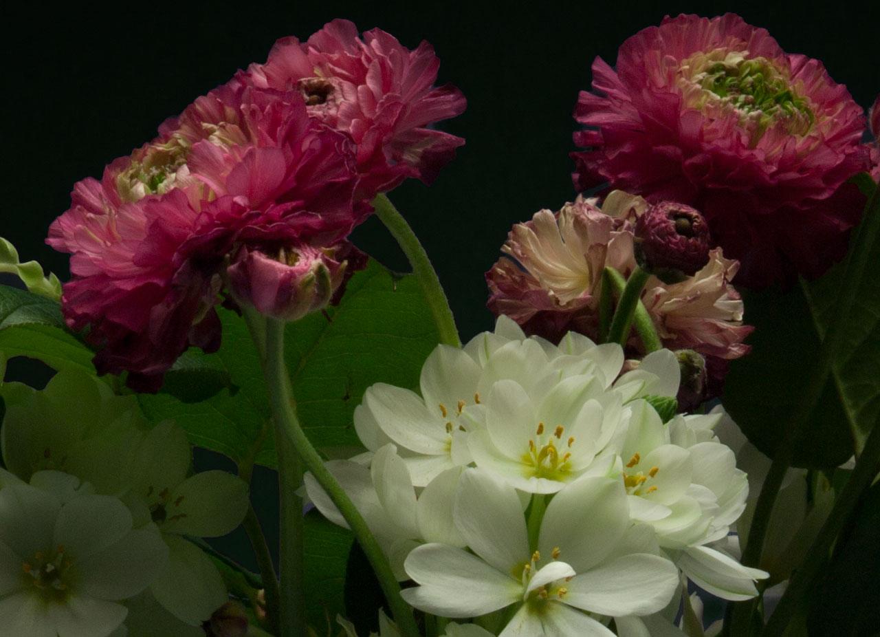 Night-Bloom_4.jpg