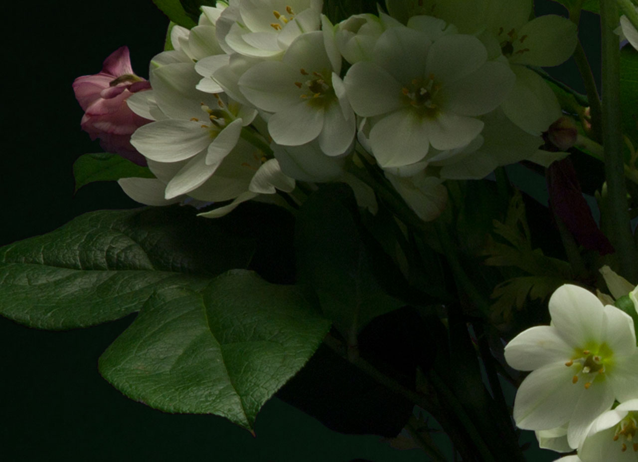 Night-Bloom_3.jpg