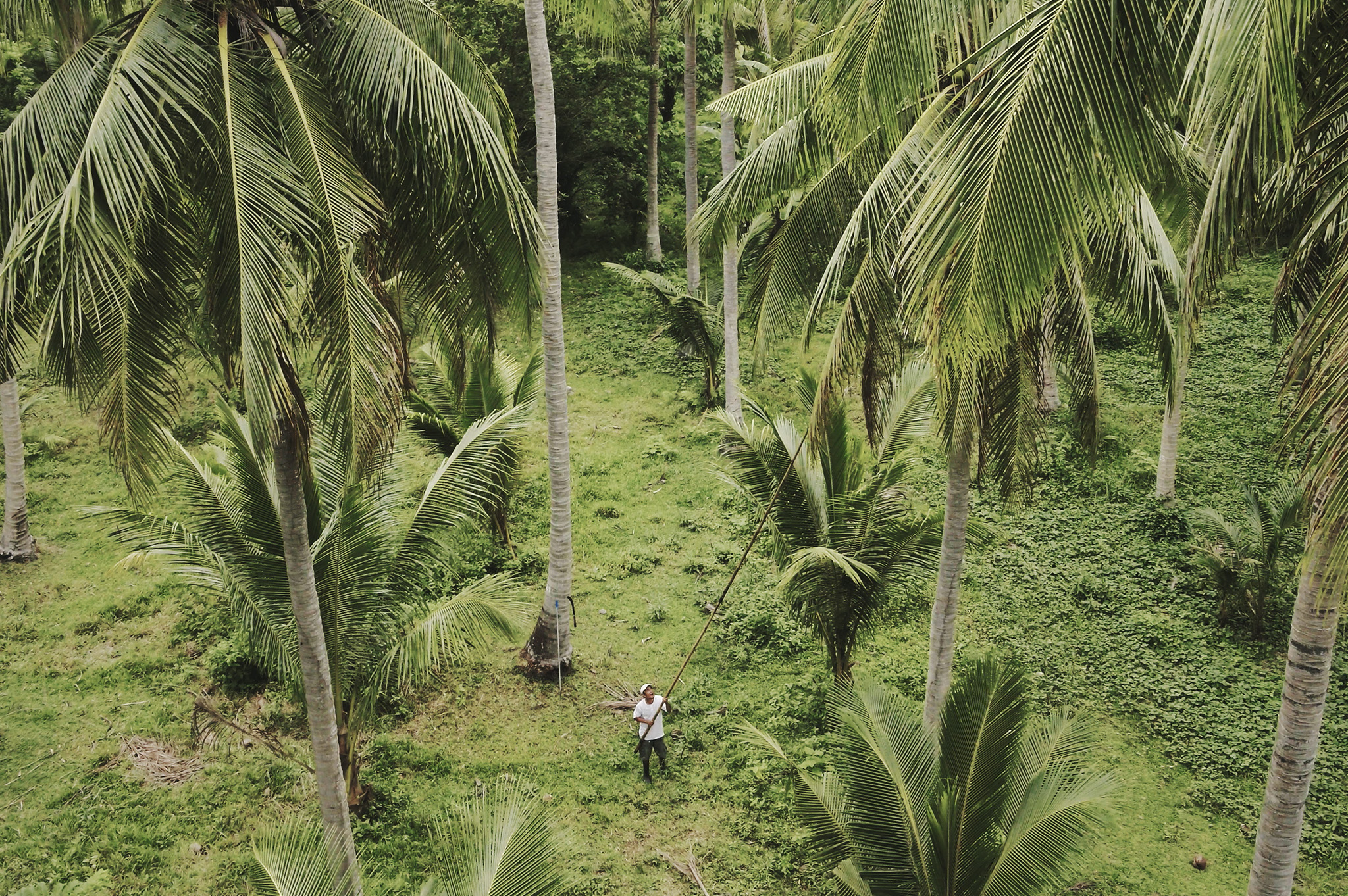 ONE Coco Water Selects_drone tree.jpg
