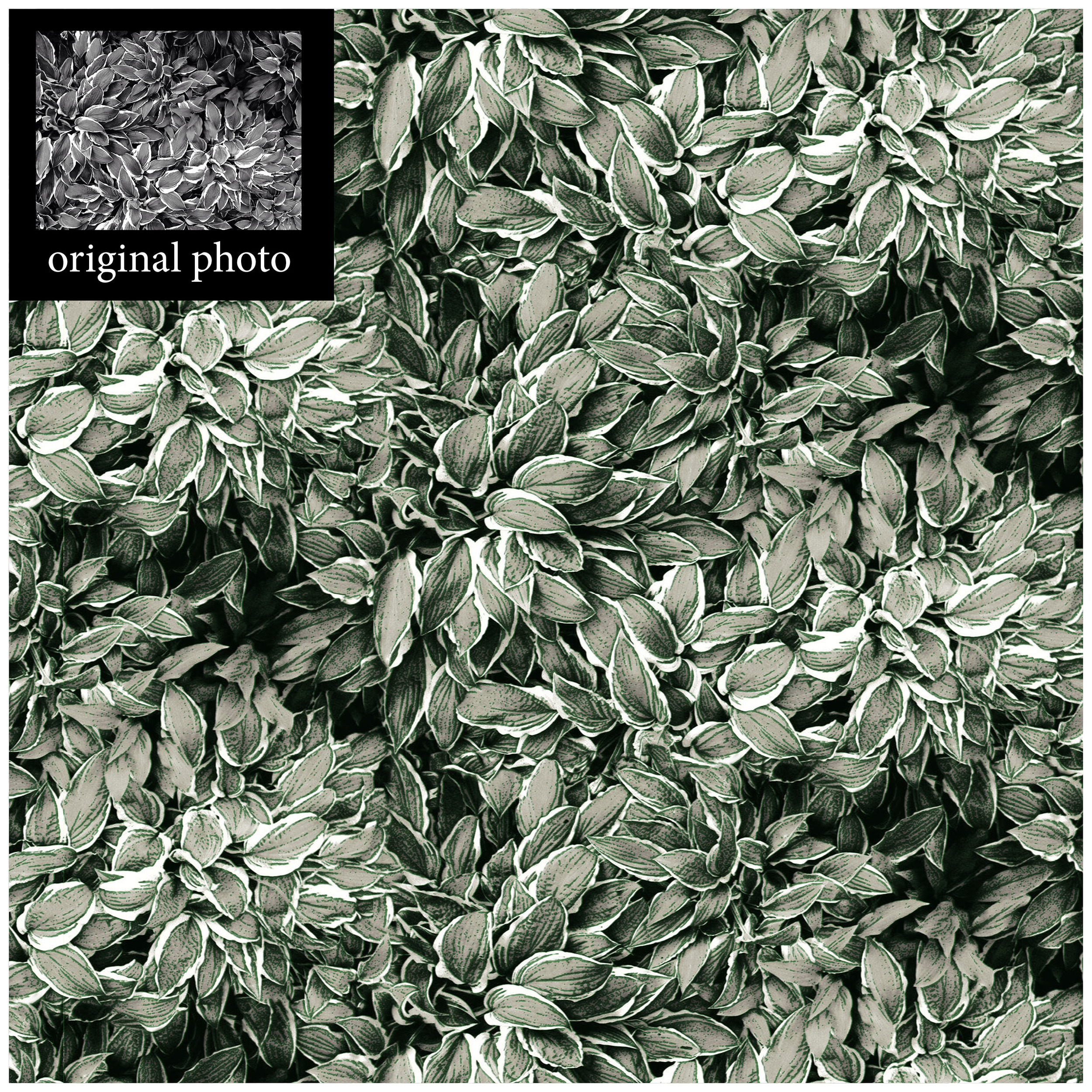 Hosta Forest- F.Oui! and Quelquefois photography.jpg