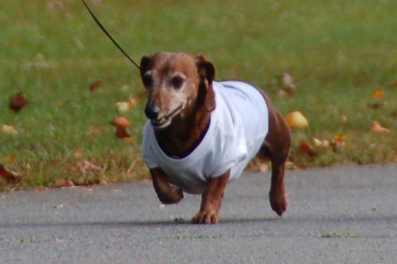 Walk For Paws 3.jpg
