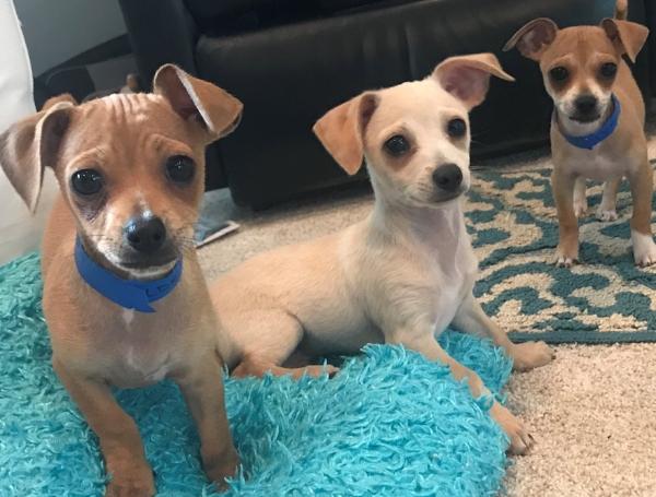 puppies at home.jpg