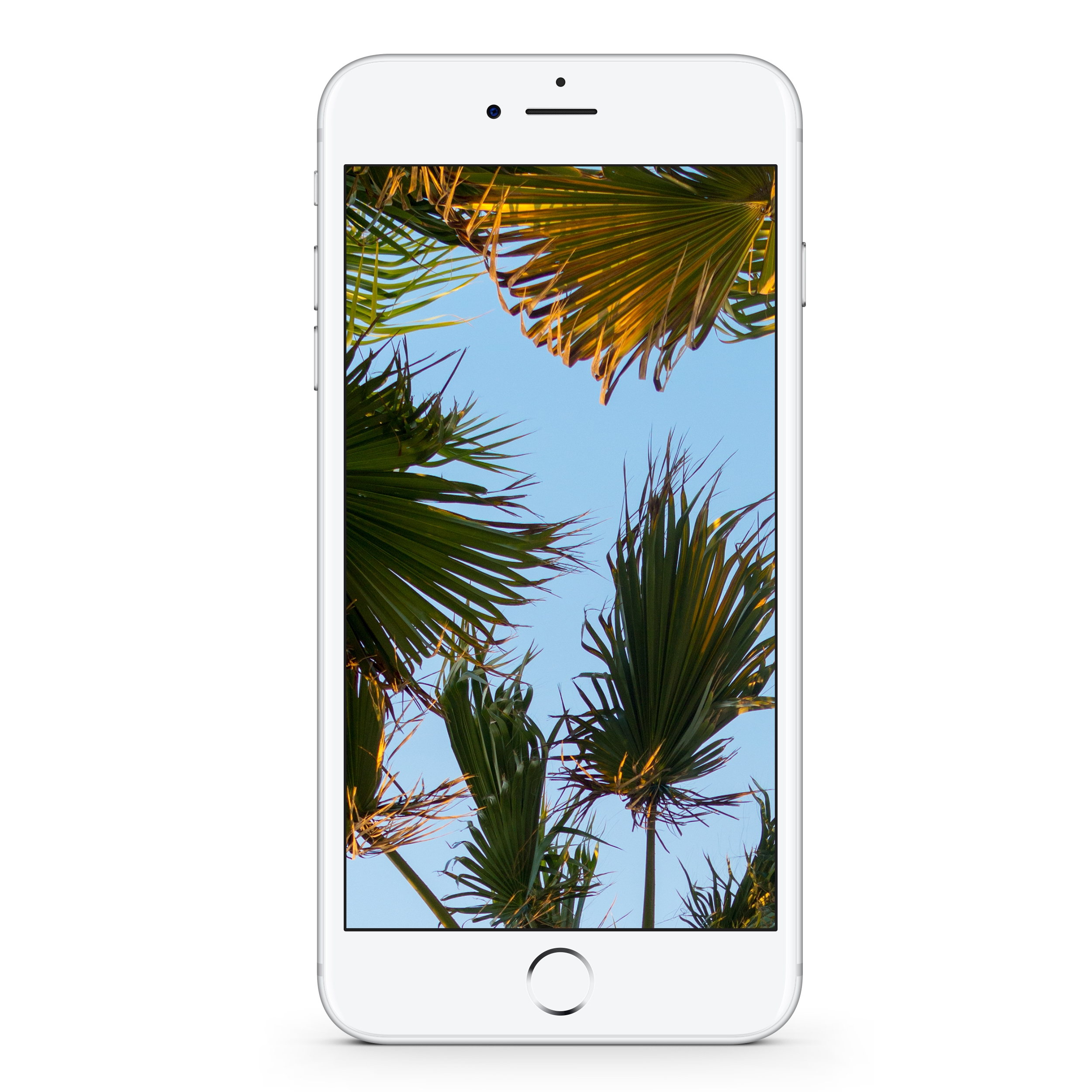 Palm Trees #2