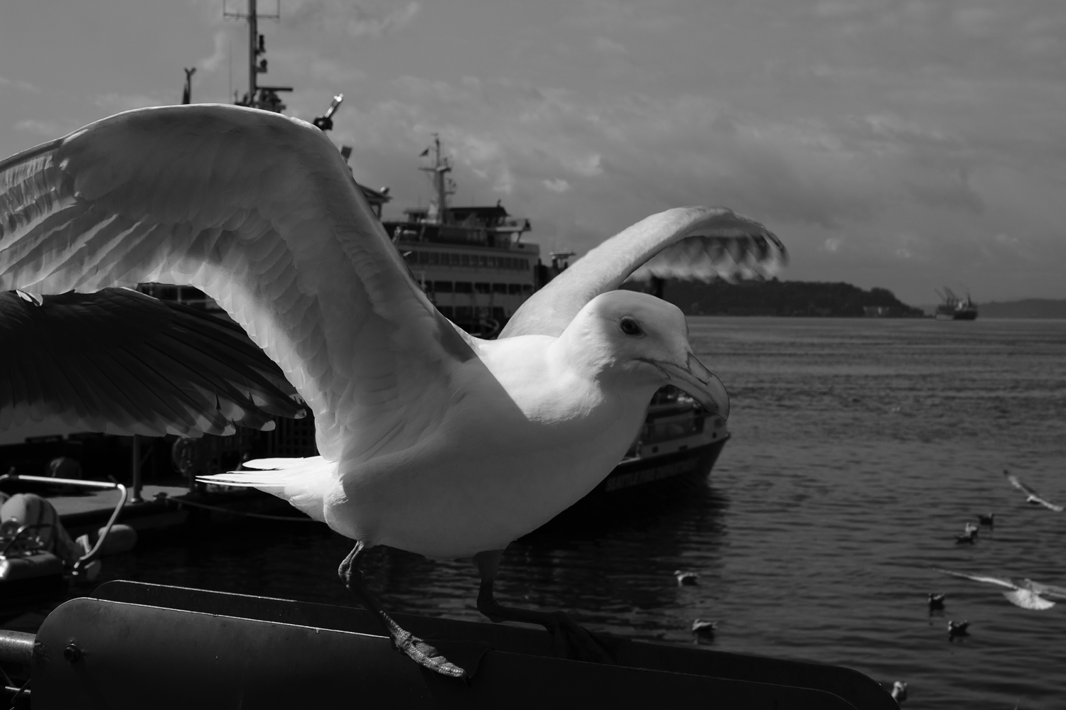 The Waterfront Gull