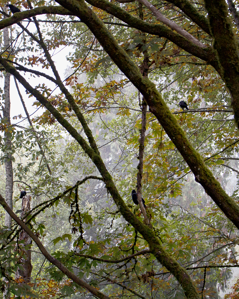 Misty Morning in Early Autumn