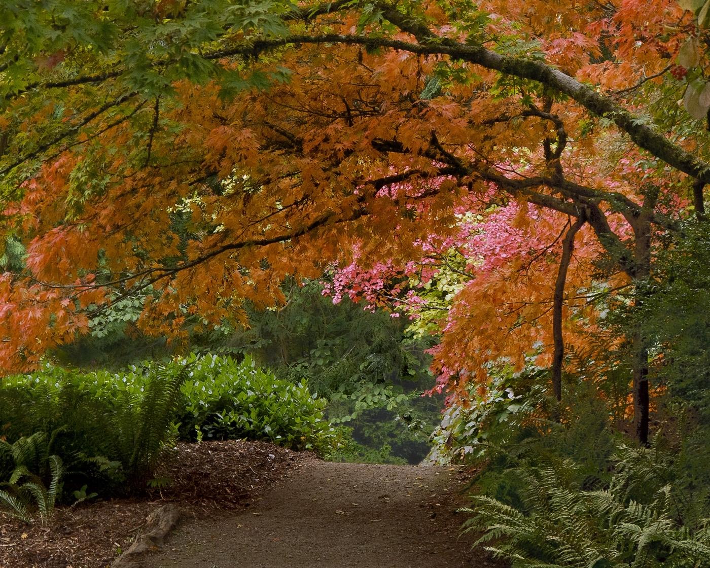Texture of Seattle Autumn
