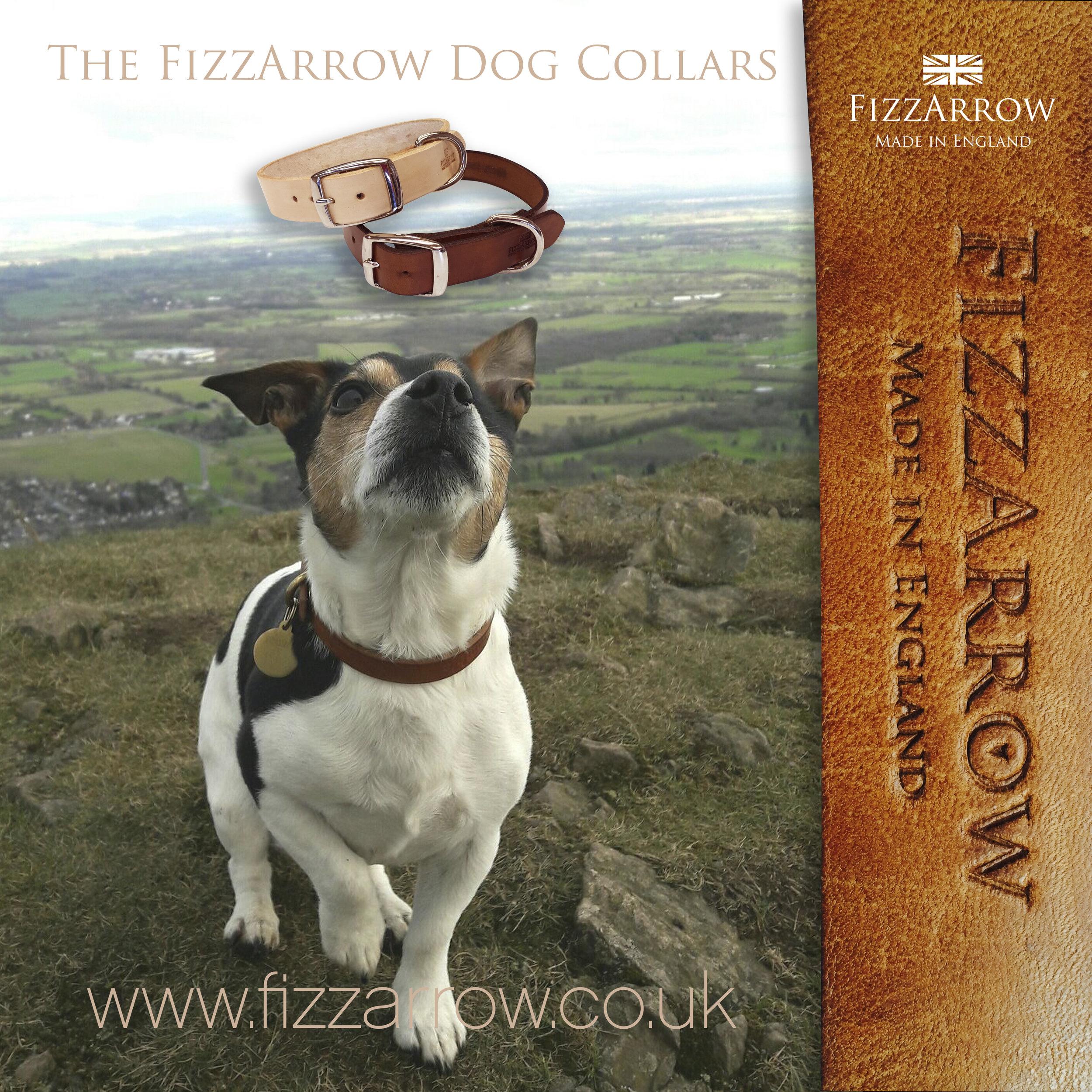 ©Bramble wearing FizzArrow leather collar