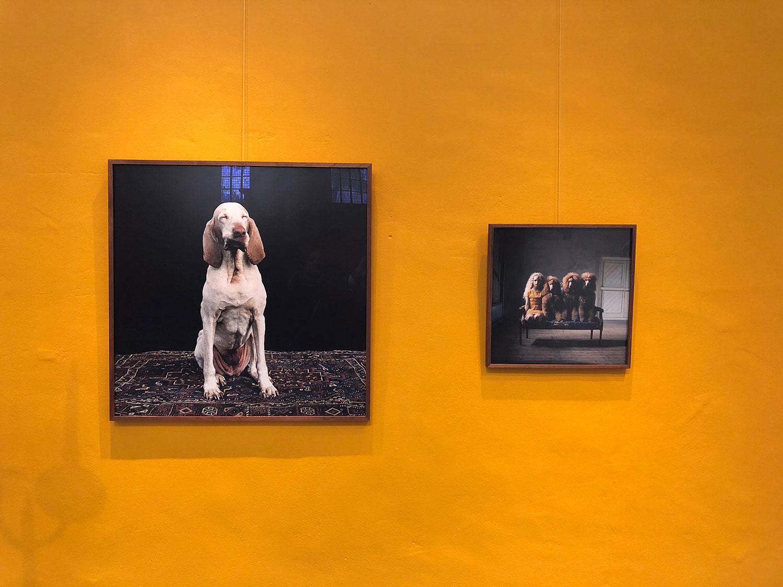"""Hellen van Meene: """"Dogs and Girls"""""""