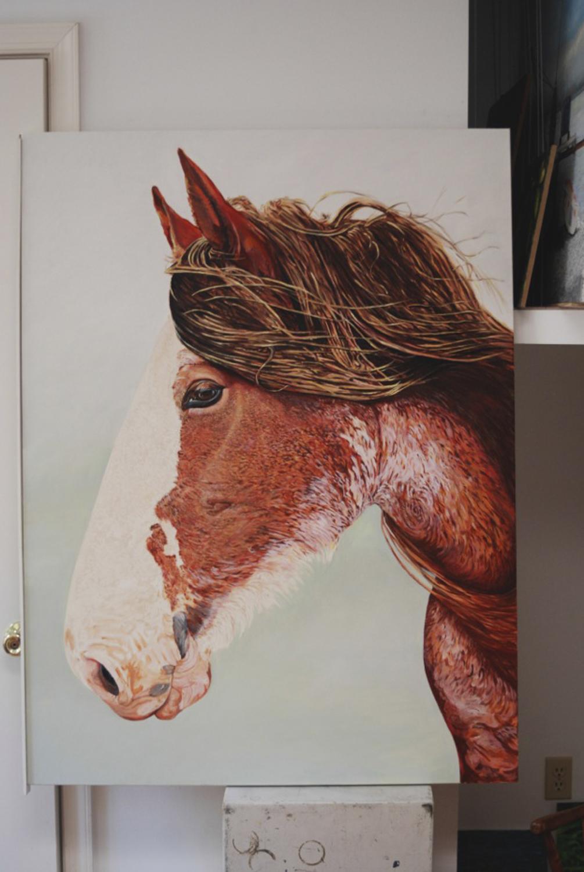 N Zealand sweetheart....oil on canvas