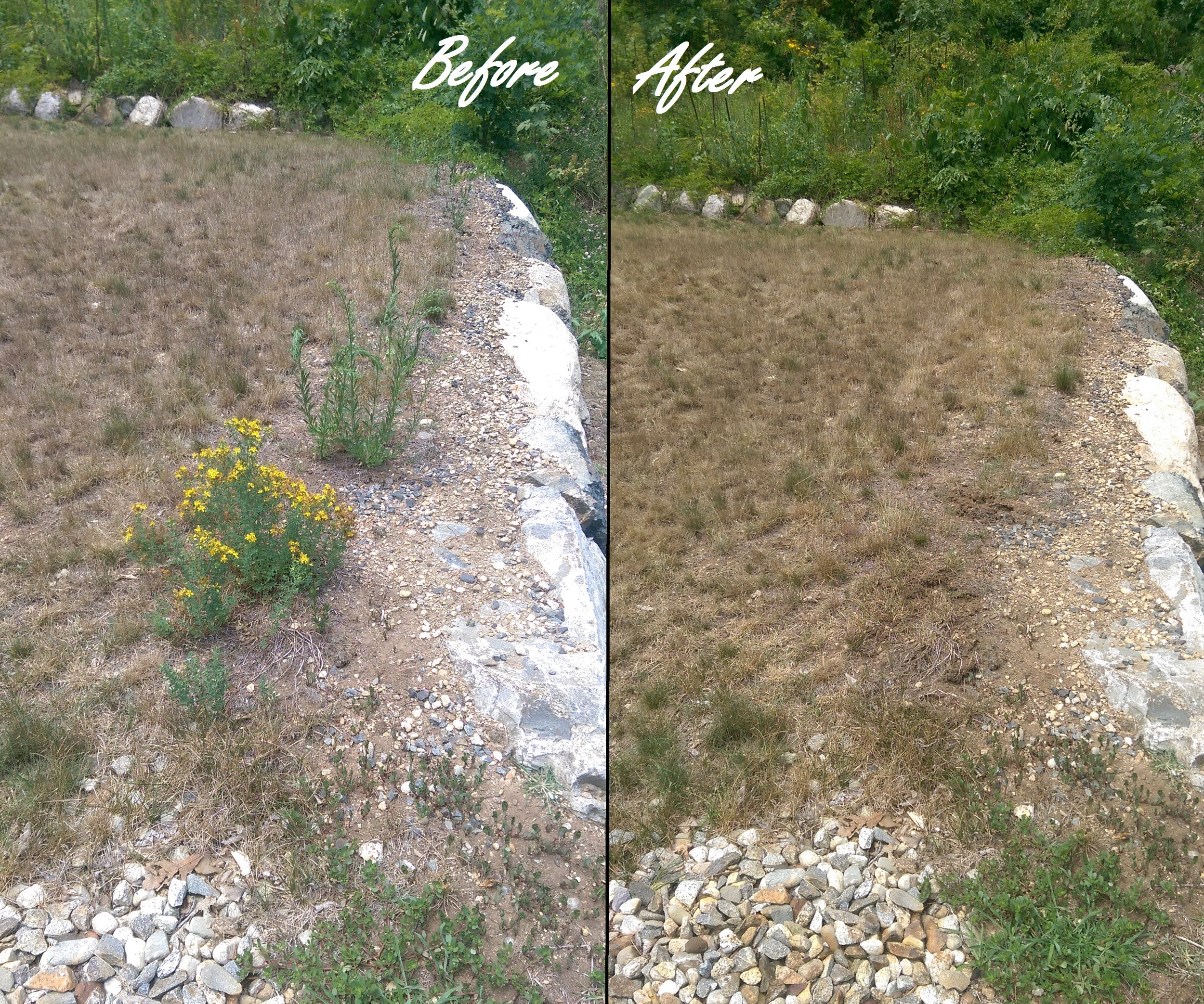 Lawn before and after