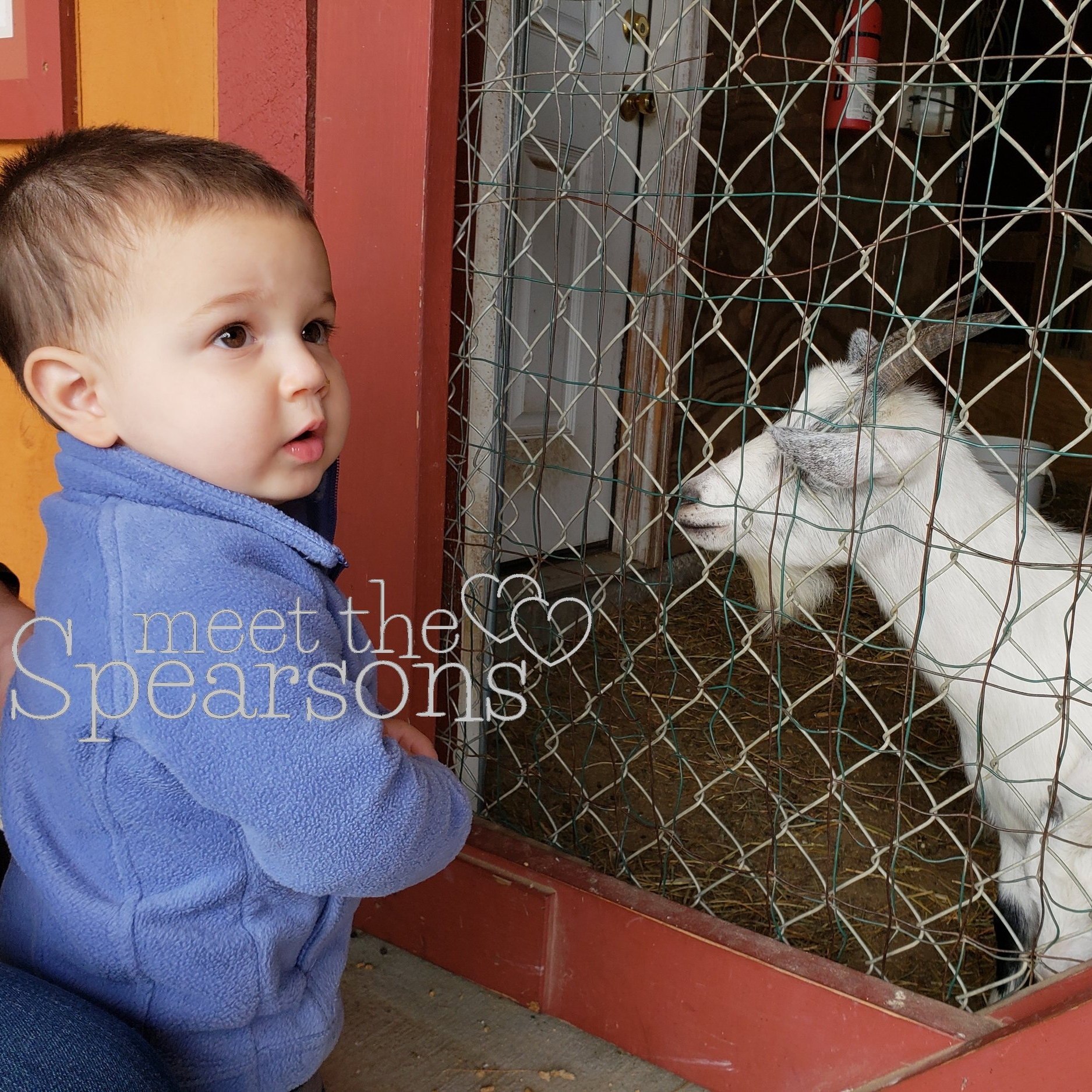 Parlee Farms goats petting zoo