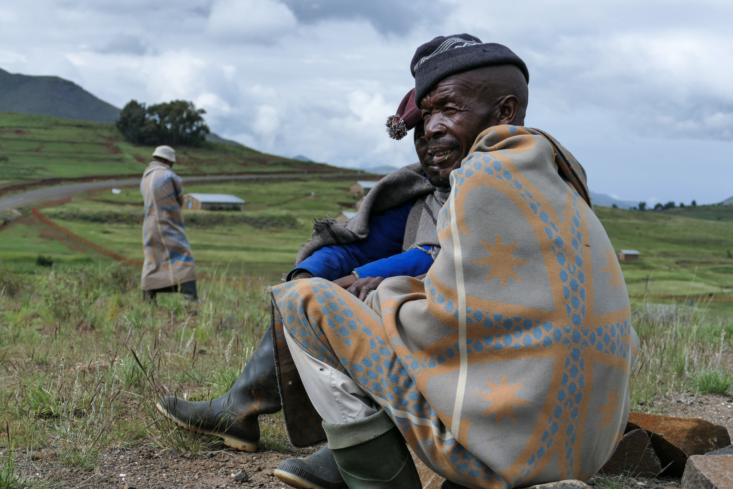 Basotho shepherds watching over their grazing cows in the morning.