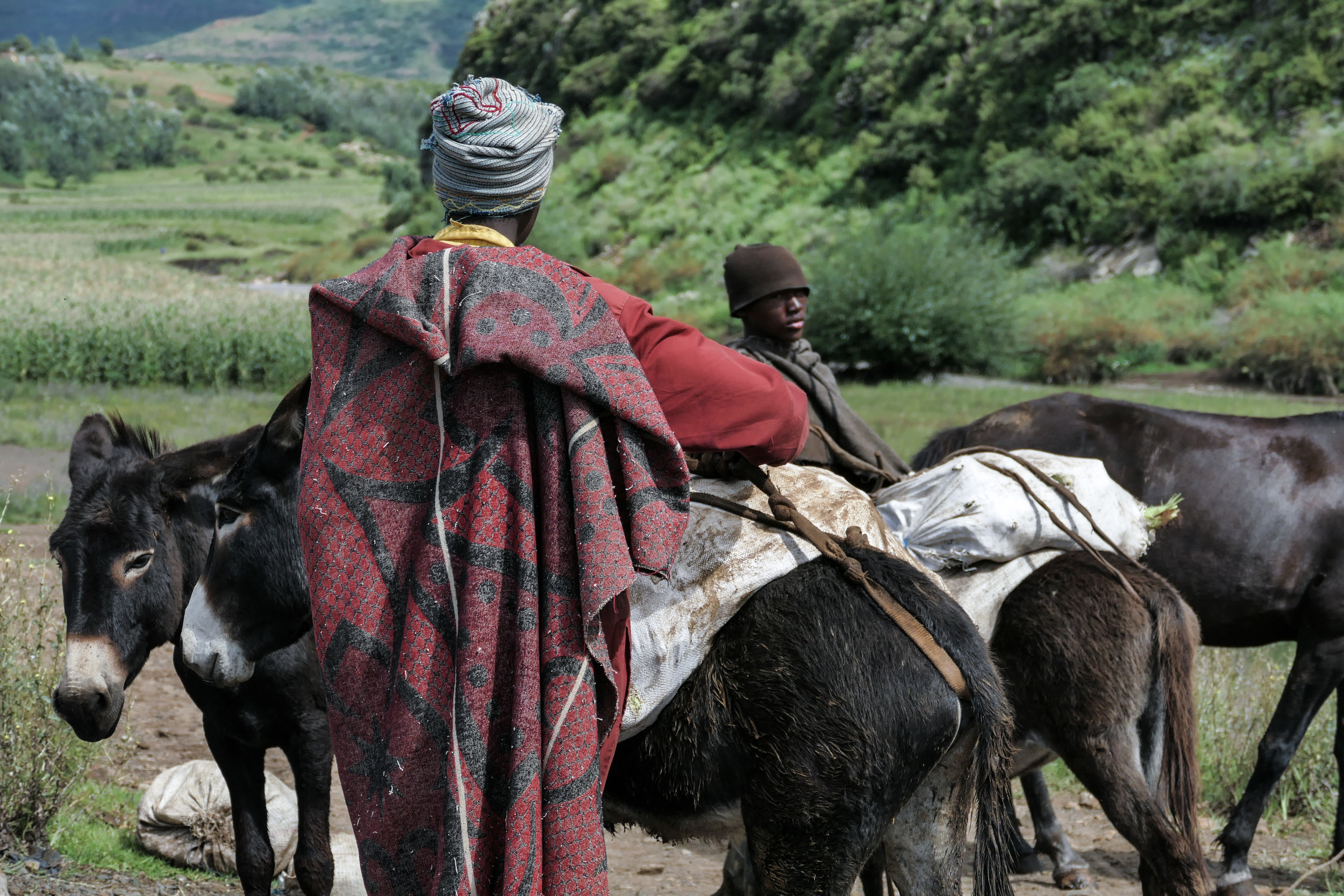 Basotho shepherds boys wearing traditional Basotho blankets ready their maize (corn) for the markets.