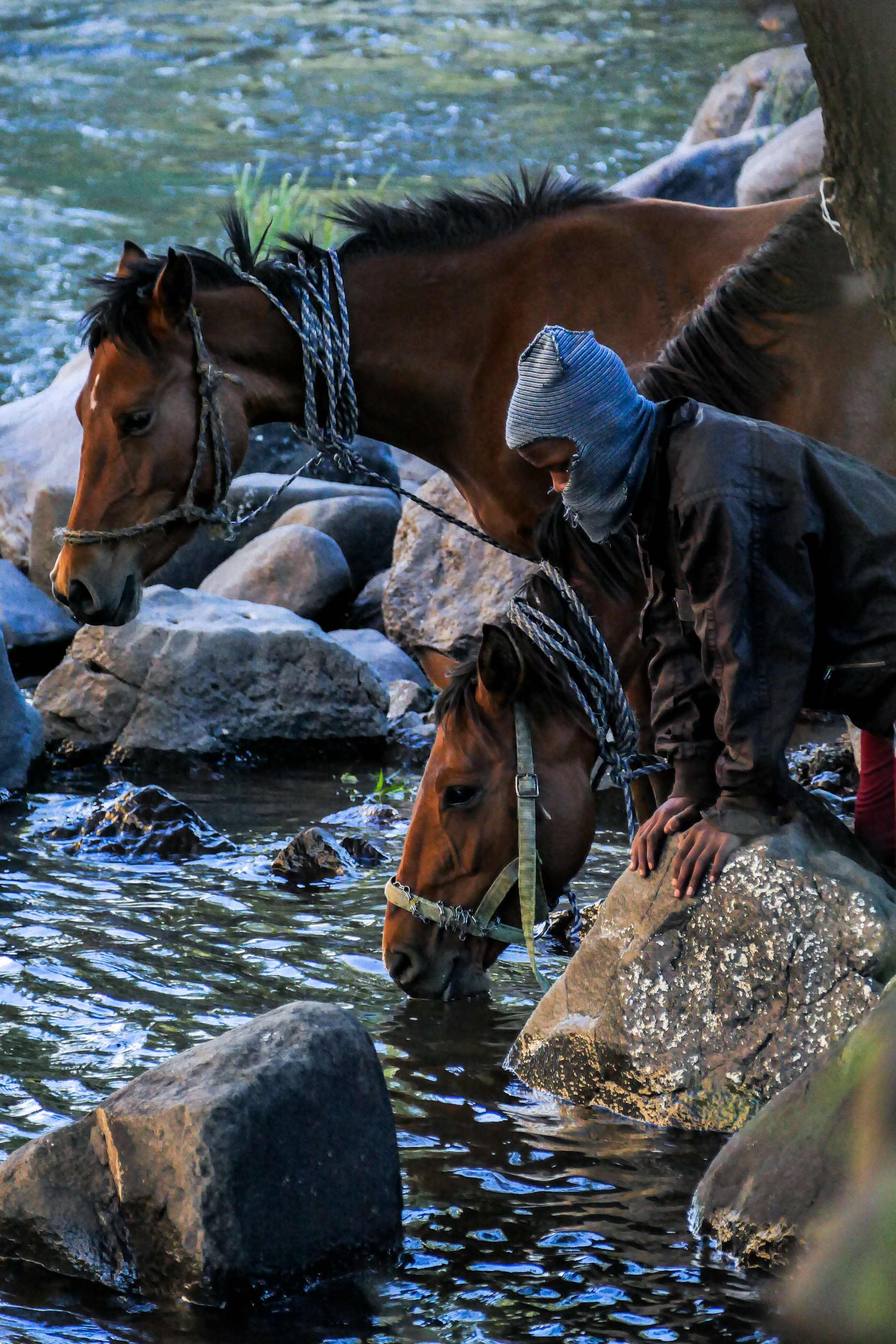 Basotho Shepherd boy takes his horses for some water in Semonkong River in Lesotho