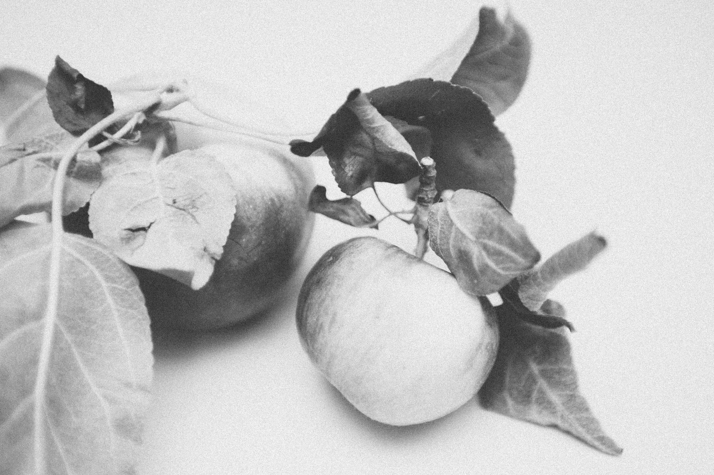 foodstyling + imagery by ashley updyke photography