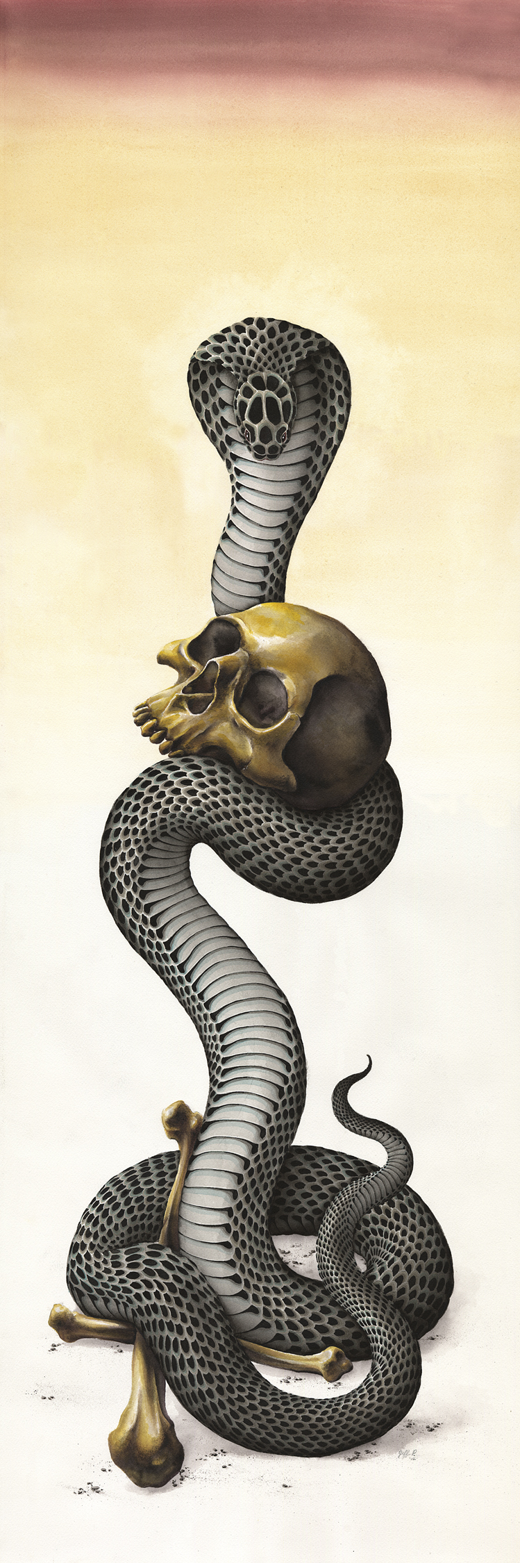 4' Cobra