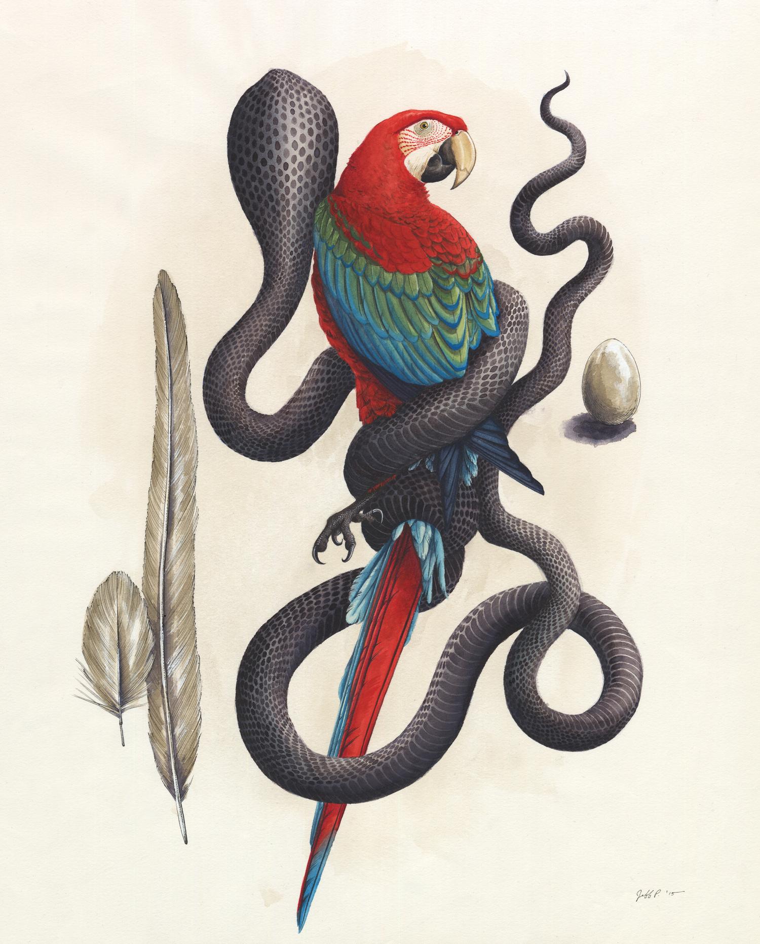 Cobra & Macaw