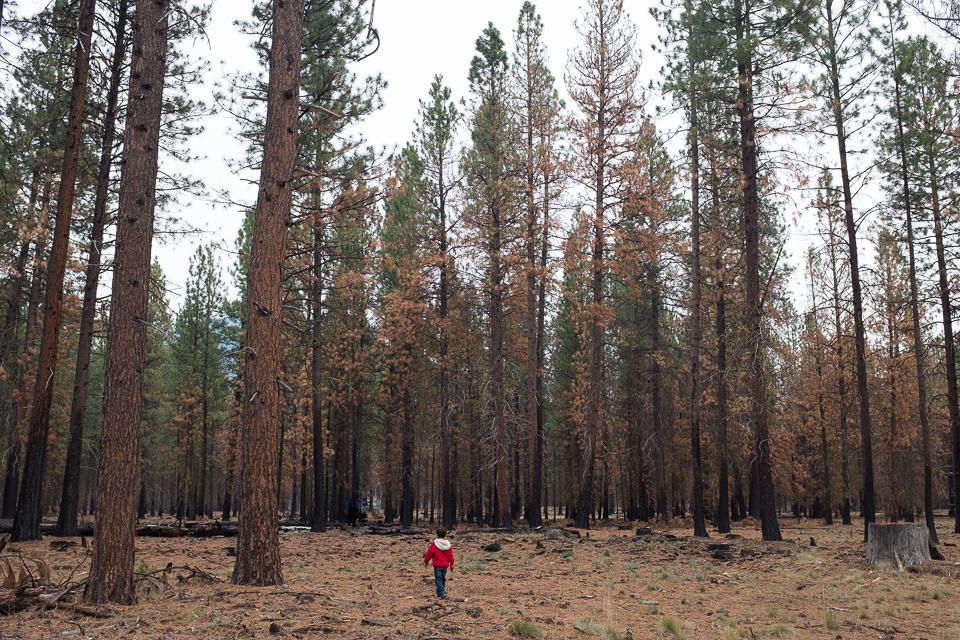 2015 10 Black Butte-20-2.jpg