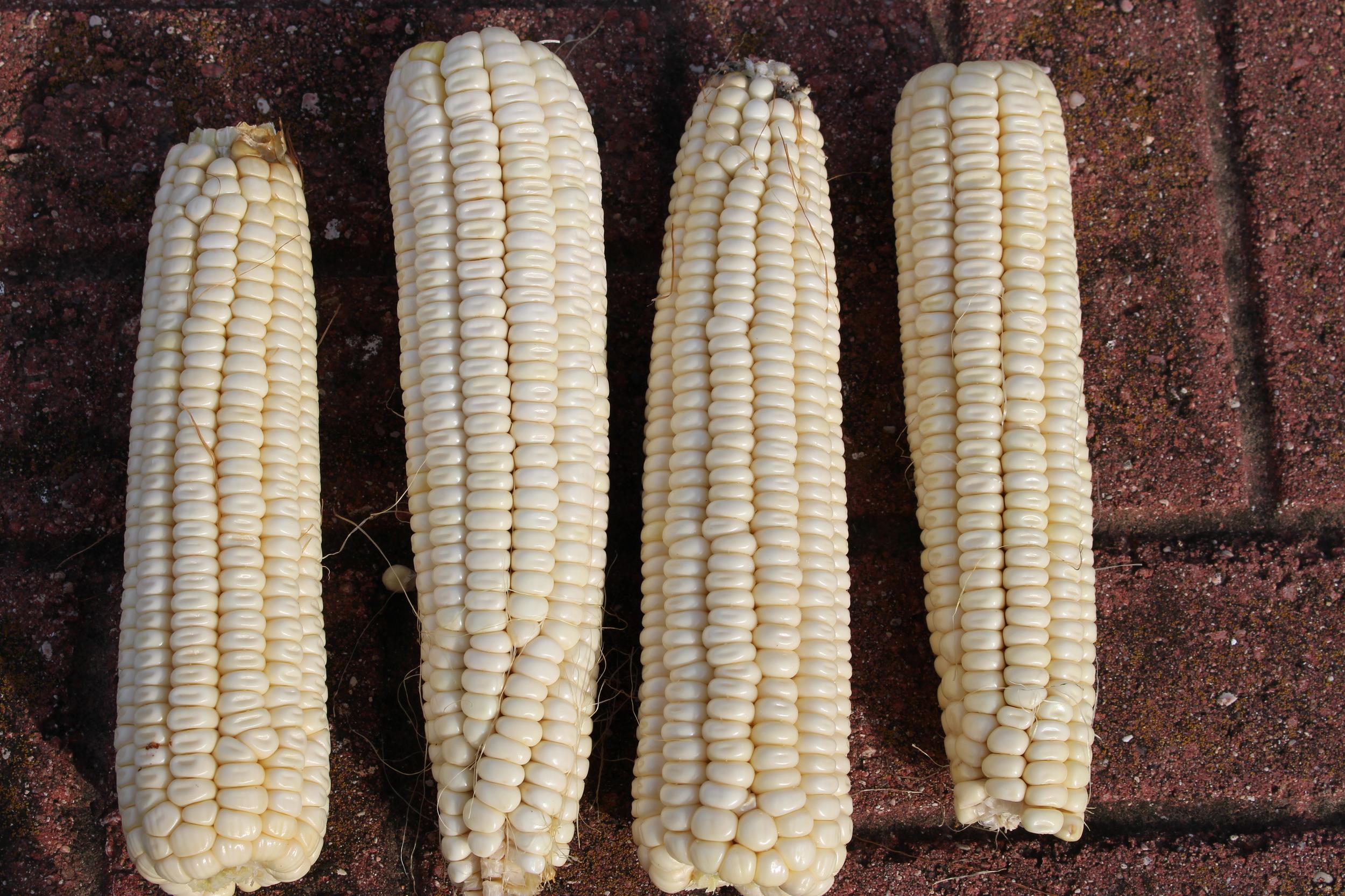 Niles White Corn